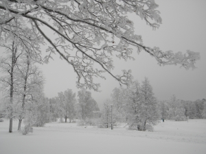 Silvered_frosty_trees_in_winter_wonderland_Helsinki_5