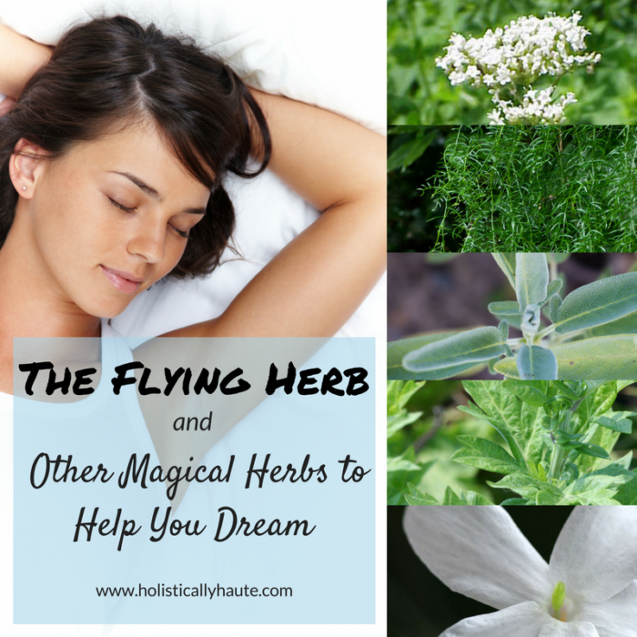 Magical Herbs to Help You Dream