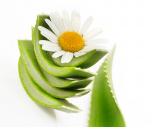 Sliced aloe vera and chamomile can soothe alcohol-damaged skin.